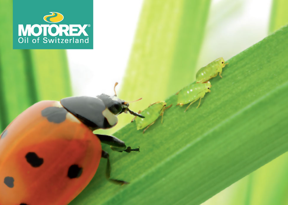 motorex-swisscool-killing-bacteria-in-machining-feature